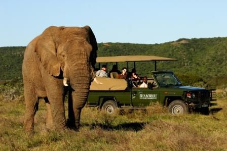 Londolozi Private Game Reserve A Luxury Safari Experience